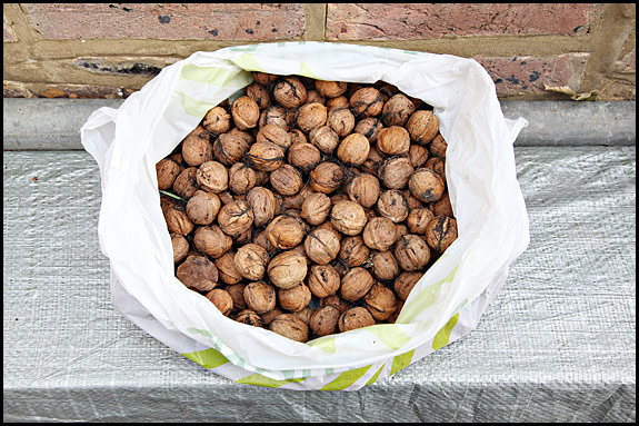 Picture of walnuts as harvested