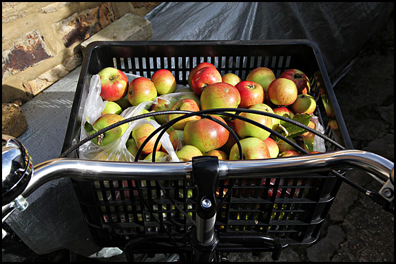 Picture of apples in the basket of a Workcycles FR8