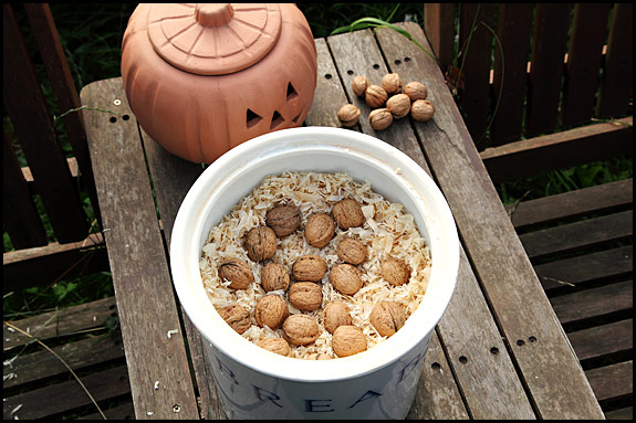 picture of walnuts stored in woodchips